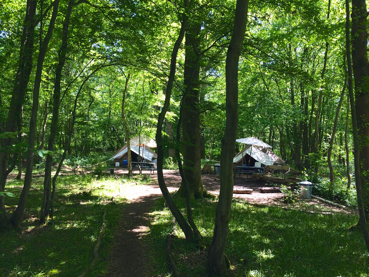 Eco Camp Uk - Wild Boar Wood Campsite : Ashdown Forest