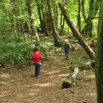 Eco Camp - Woodland Walk