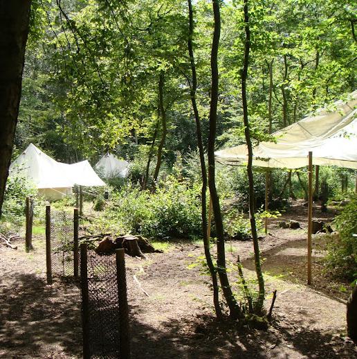 Wild Boar Wood Campsite - Ashdown Forest