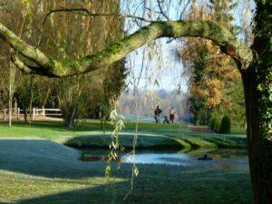Sweetwoods - Landscape 1