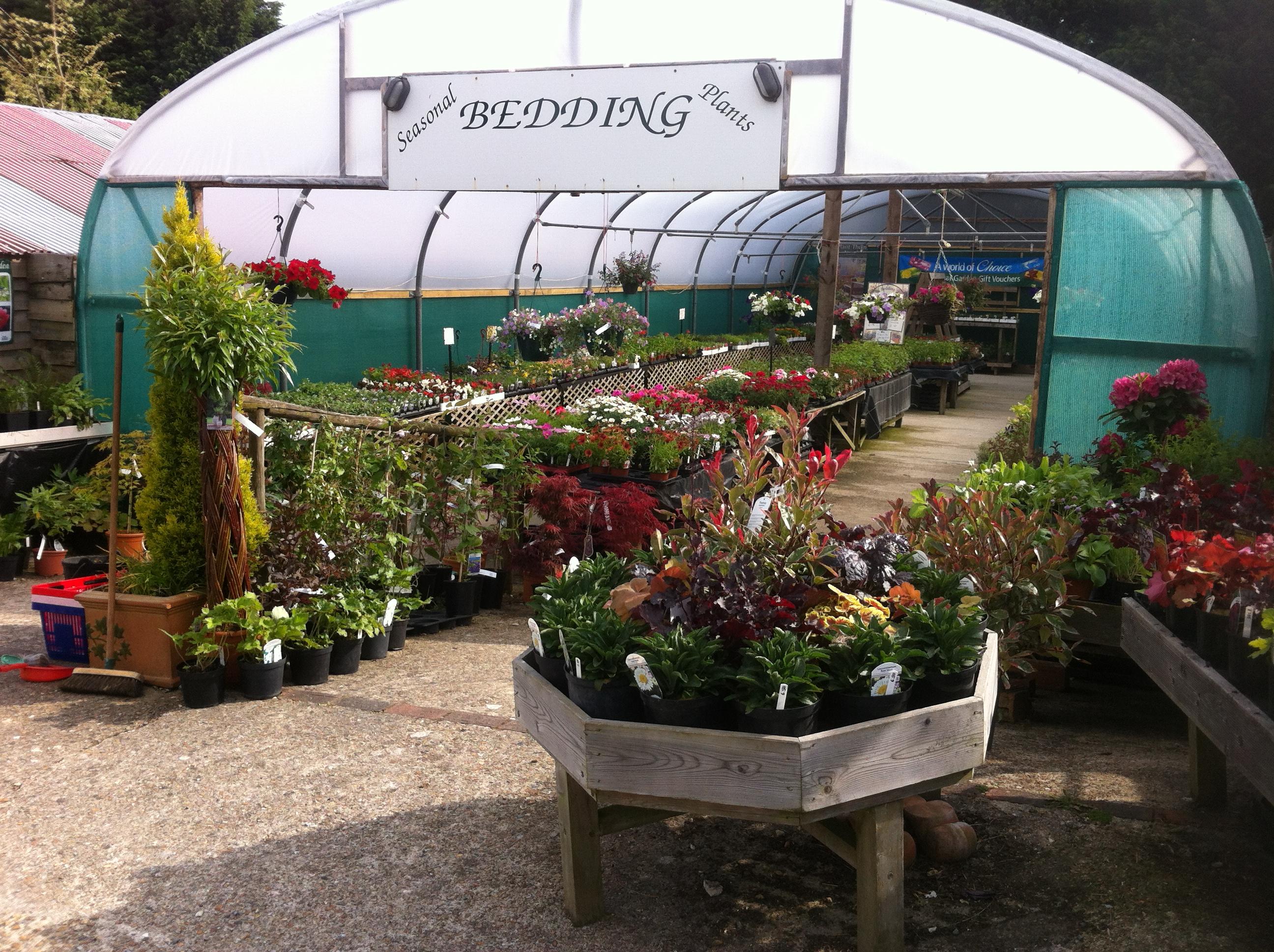 Ashdown Forest Garden Centre Plants 2 | Ashdown Forest