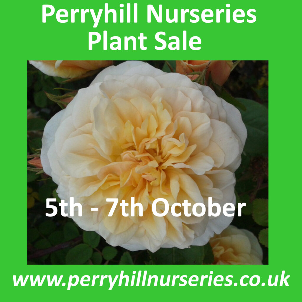 Perryhill Nurseries Advert v4 copy